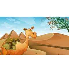 A camel at the desert vector image