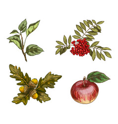 set of autumn fruits and leaves isolated on white vector image