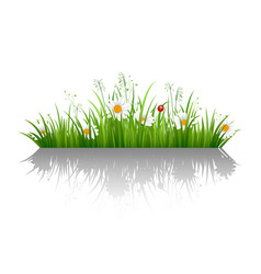green grass border with shadow vector image vector image