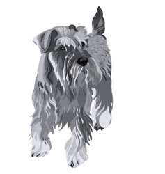 Miniature schnauzer dog vector