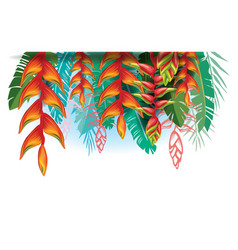arangement with heliconia flowers vector image