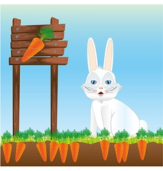 Rabbit in harvest of carrots vector