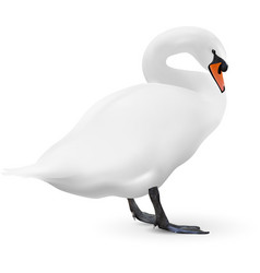 White swan isolated on white vector