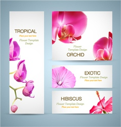 Orchid Flower Design vector image