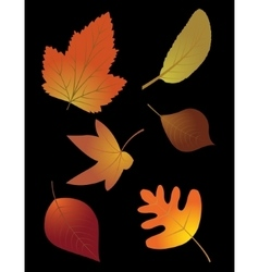 Autumn leaves set on black background vector image