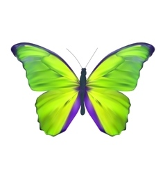 Green butterfly isolated on white realistic vector