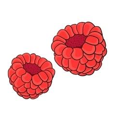Raspberry berry vector image