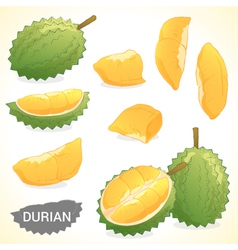 Set of durian in various styles format vector