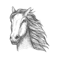 Racehorse stallion sketch for horse racing theme vector