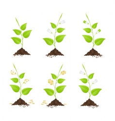 money trees vector image