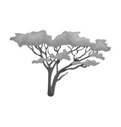 tree in the savannahafrican safari single icon in vector image