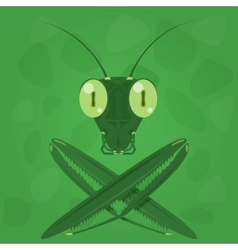 Mantis icon on a green background vector image