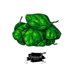 spinach leaves heap hand drawn vegetabl vector image vector image