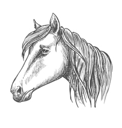 Riding horse head sketch for equine sport design vector
