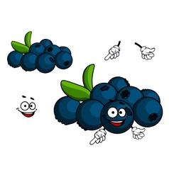 Cartoon blueberry character vector
