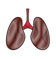 Lungs anatomy icon image vector