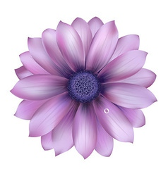 Lilac flower with water drop vector