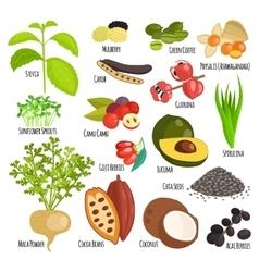 Vegetarian superfood healthy vegetable vector image vector image