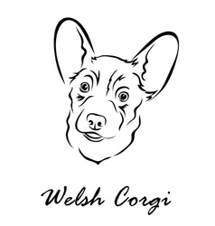 Welsh corgi vector