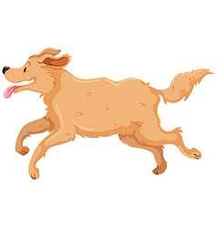 Dog with brown fur running vector