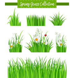 Border set with green grass and flower vector