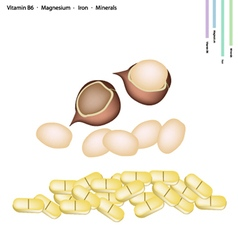 Macadamia nuts with vitamin b6 magnesium and iron vector