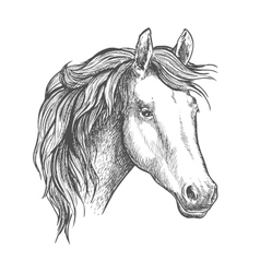 Horse head sketch of arabian mare vector