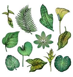 Green hand drawn tropical plants set vector