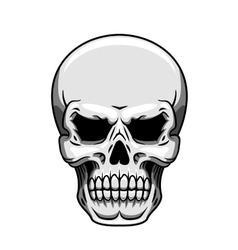 Gray human skull on white vector