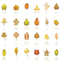 autumn leaf background and icons vector image vector image