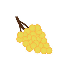 bunch of yellow grapes with isolated on white vector image vector image