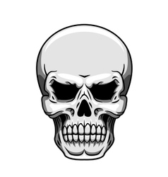 Gray human skull on white vector image vector image