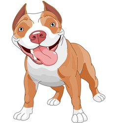 pitbull vector image vector image