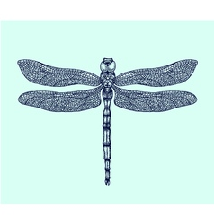 Hand-drawn dragonfly vector