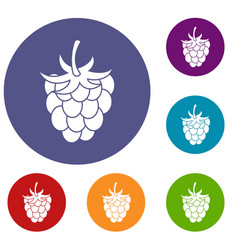 Raspberry or blackberry icons set vector