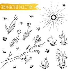 Spring flowers collection vector