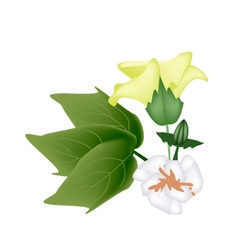 Fresh yellow cotton flower with bud on branch vector