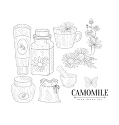 Camomile cosmetics and tea hand drawn realistic vector