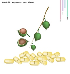 Macadamia with vitamin b6 magnesium and iron vector