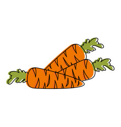 carrots fresh isolated icon vector image