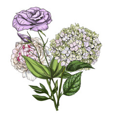 Hand drawn bouquet of phlox eustoma and peony vector