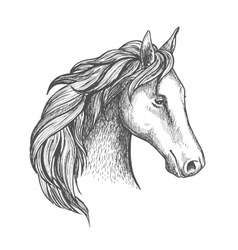 Sketched horse head icon of arabian stallion vector image vector image
