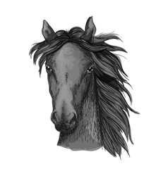 Black arabian horse head sketch vector image
