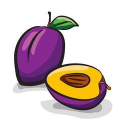 Plum fruits sketch drawing vector