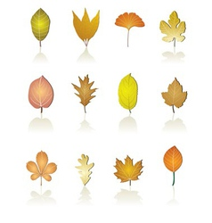Different kinds of tree leaf icons vector