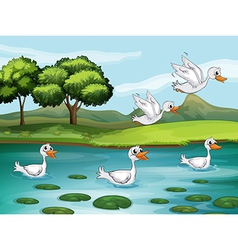 Ducks and water vector image