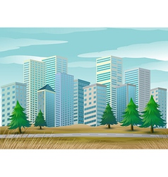 Pine trees along the street vector image vector image