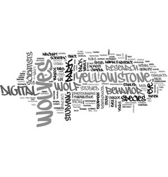 A bird s eye view of wolves text word cloud vector