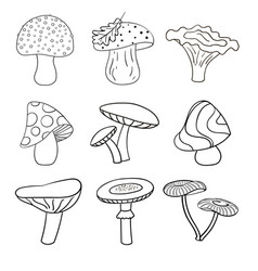 set of beautiful cute cartoon contoured mushrooms vector image