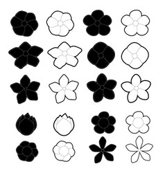 white and black flowers on a white background vector image vector image